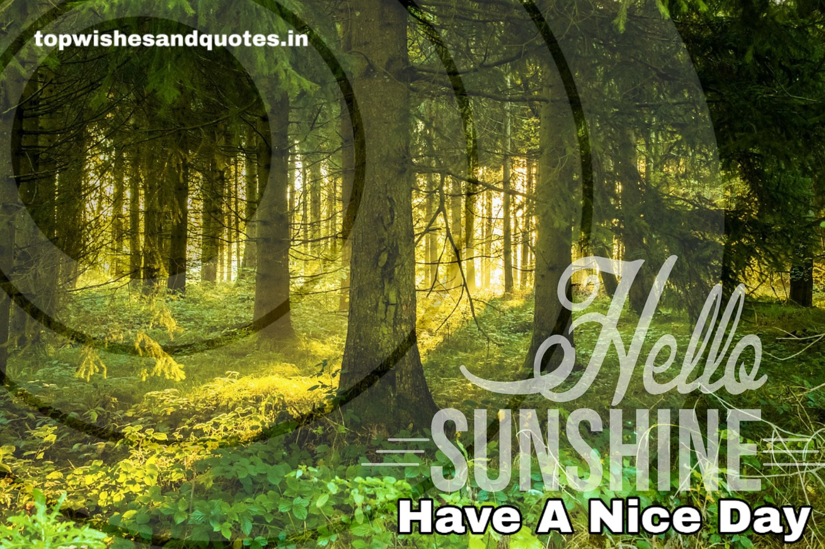 Best 310+ Good Morning Wishes, Quotes, Status and Good Morning Images for family and Friends