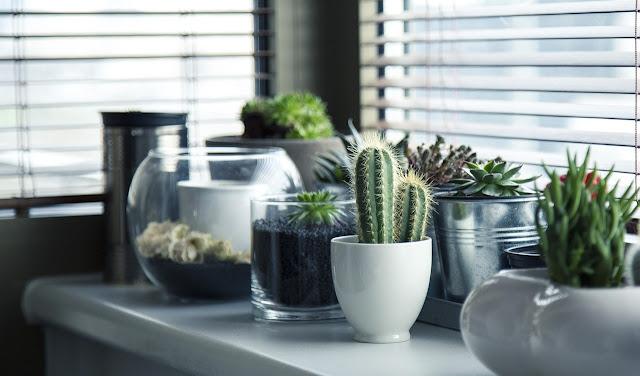 Plantas en la decoración de tu hogar