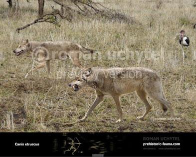 Canis etruscus
