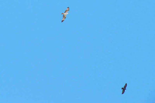 End of Crow vs Osprey flight