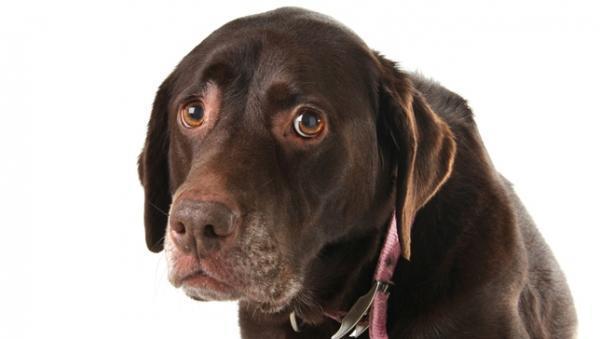 Αυτά που σκέφτεται για σένα ο σκύλος σου, θα σε κάνουν να βουρκώσεις