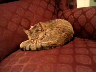 Brown tabby cat curled up on armchair