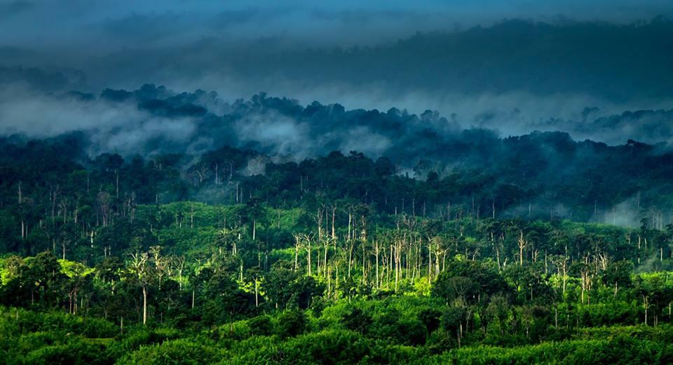Forest near Sajek Valley