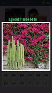 происходит цветение различных растений