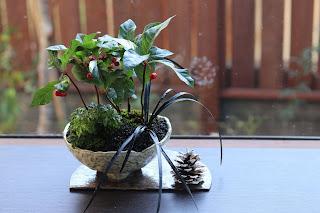 教室の生徒の皆さまの山野草盆栽作品に松ぼっくりを添えて