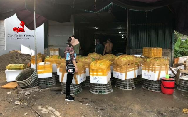Cung ung muc ong di khap cac tinh Viet Nam - 0905279878