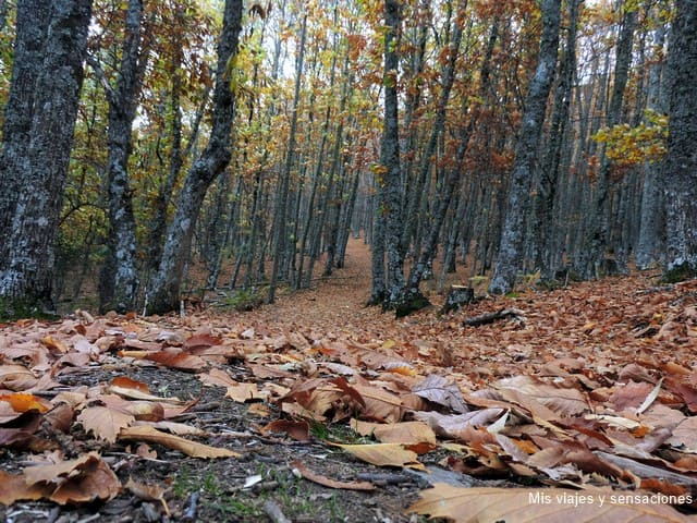 La senda del castañar, El Tiemblo, Ávila