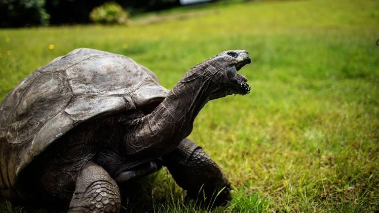 Cuidadores descobrem que tartaruga mais velha do mundo é gay