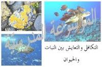 الموسوعة المدرسية - التكافل والتعايش بين النبات والحيوان