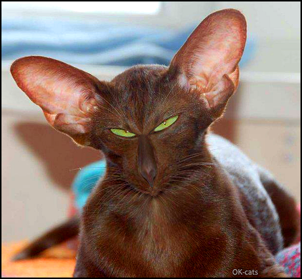 Photoshopped Cat GIF • Weird cat with huge ears, funny green eyes and a tiny mouth, haha!