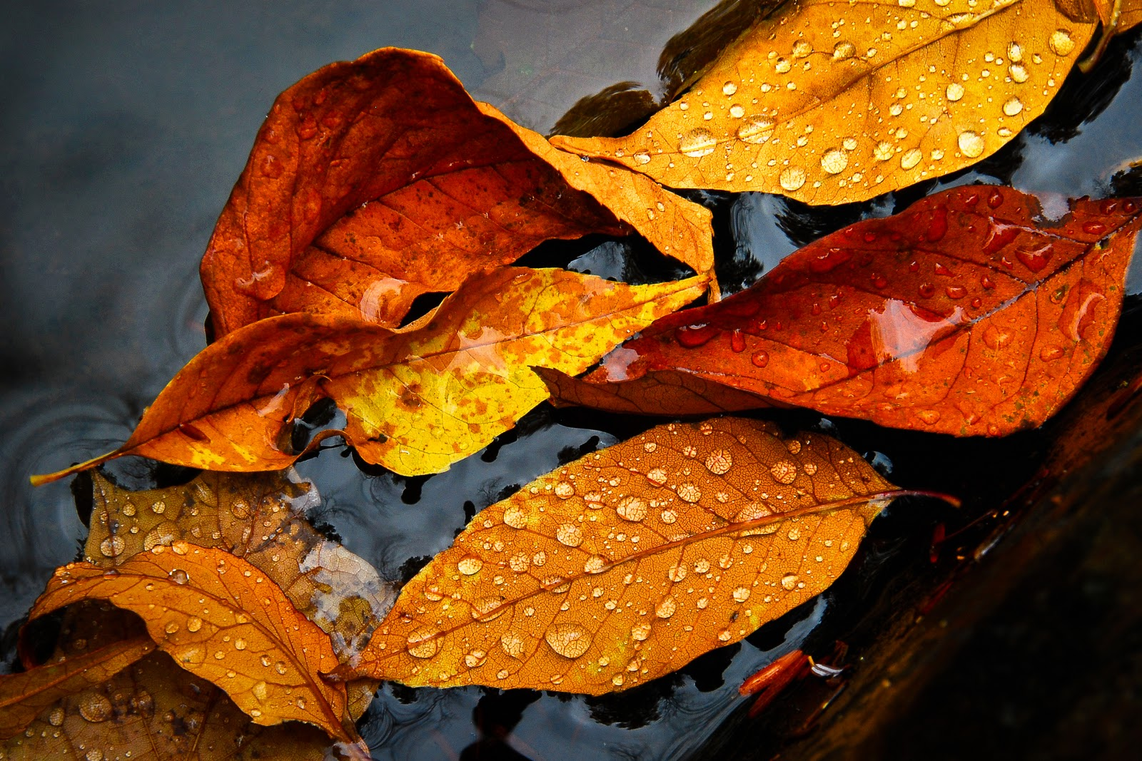 Rainy Fall Wallpaper Soul Centered Photography October 2011