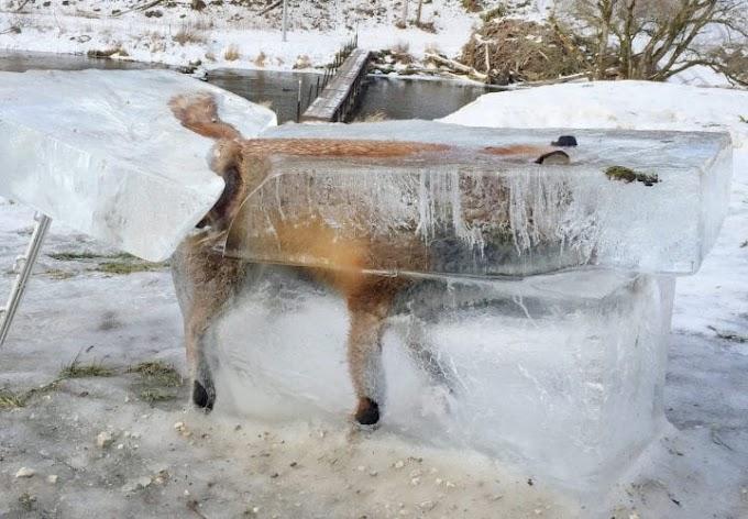 Coisas Incríveis Encontradas no Gelo