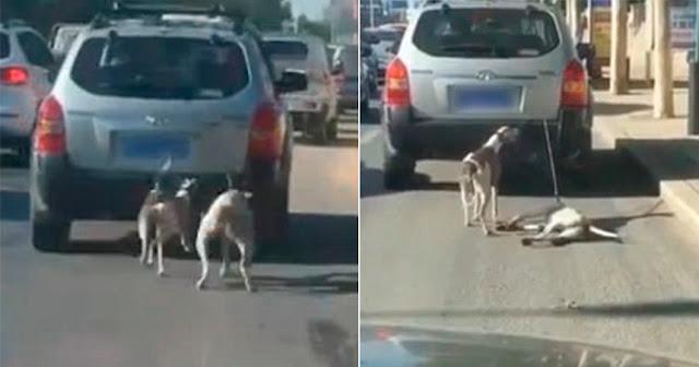 Китаец тащил привязанных к машине собак, «чтобы научить их бегать»