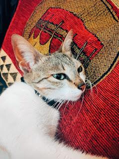 Buku dan Kucing