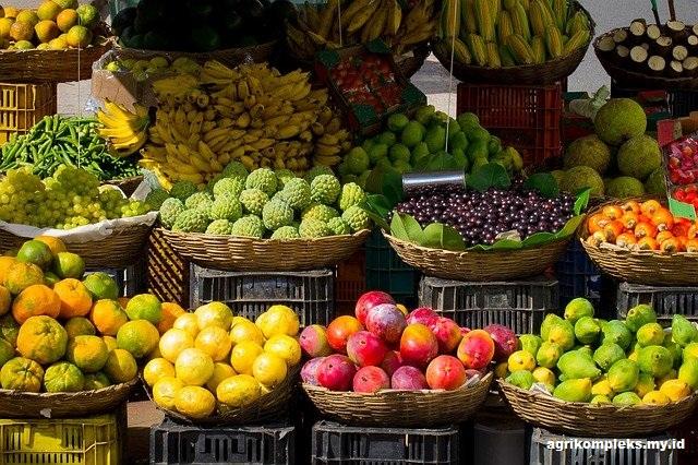 Kendala dan Solusi Pertanian Organik Di Indonesia