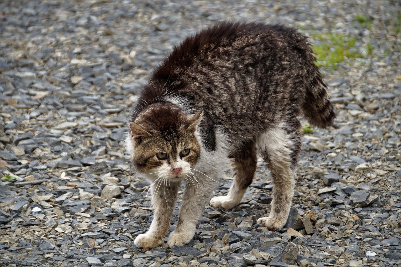 Que dois-je faire si j'ai un chat agressif?