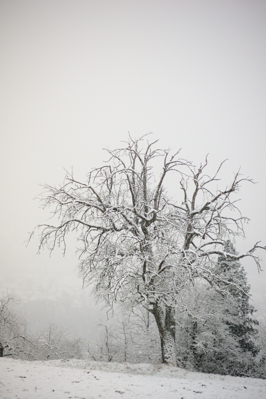 Projekt ABC: B wie Baum im Schnee +  Royusch Unterwegs – Fotochallenge