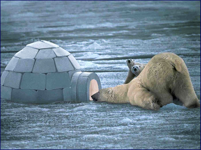 "Mama Polar Bear and her cubs are looking inside their neighbor's igloo. Mama Bear asks in a southern drawl "" Y'all ok in there? Looks like you need more fish... that's not even enough to feed one of my babies! Be right back with lots more for all y'all!"" #adorable #relatable #bears #polar #animals #funny"