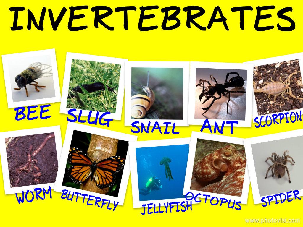 Blog De Segundo Del Ciudad De Cordoba Invertebrates