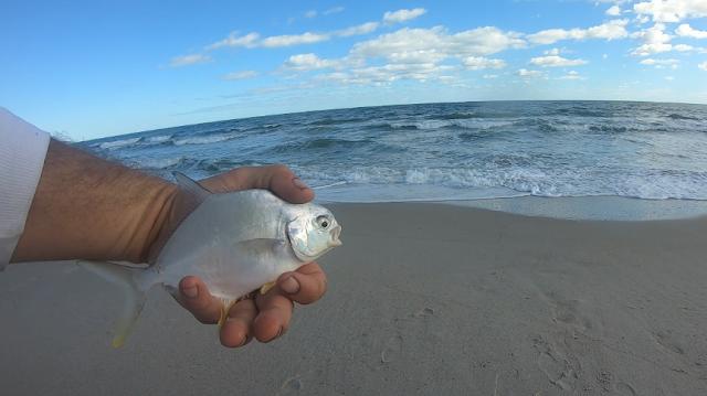 Florida, East Coast, Florida East Coast, Florida East Coast Surf Fishing, Fishing, Fishing Reports, Surf Fishing, Fish Reports, Anglers, Florida Fishing,
