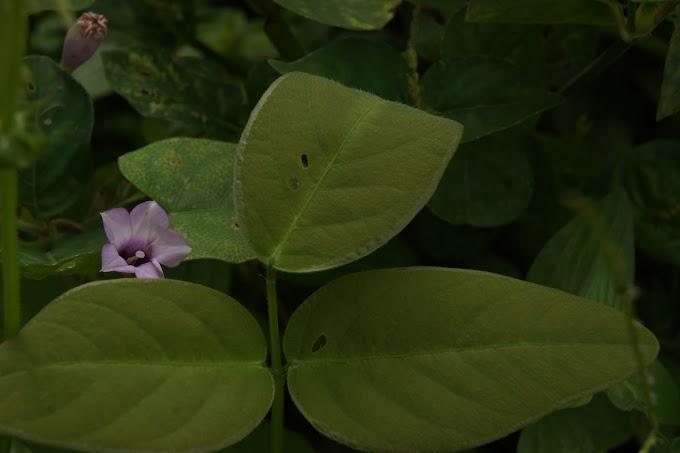 Bunga indah warna ungu