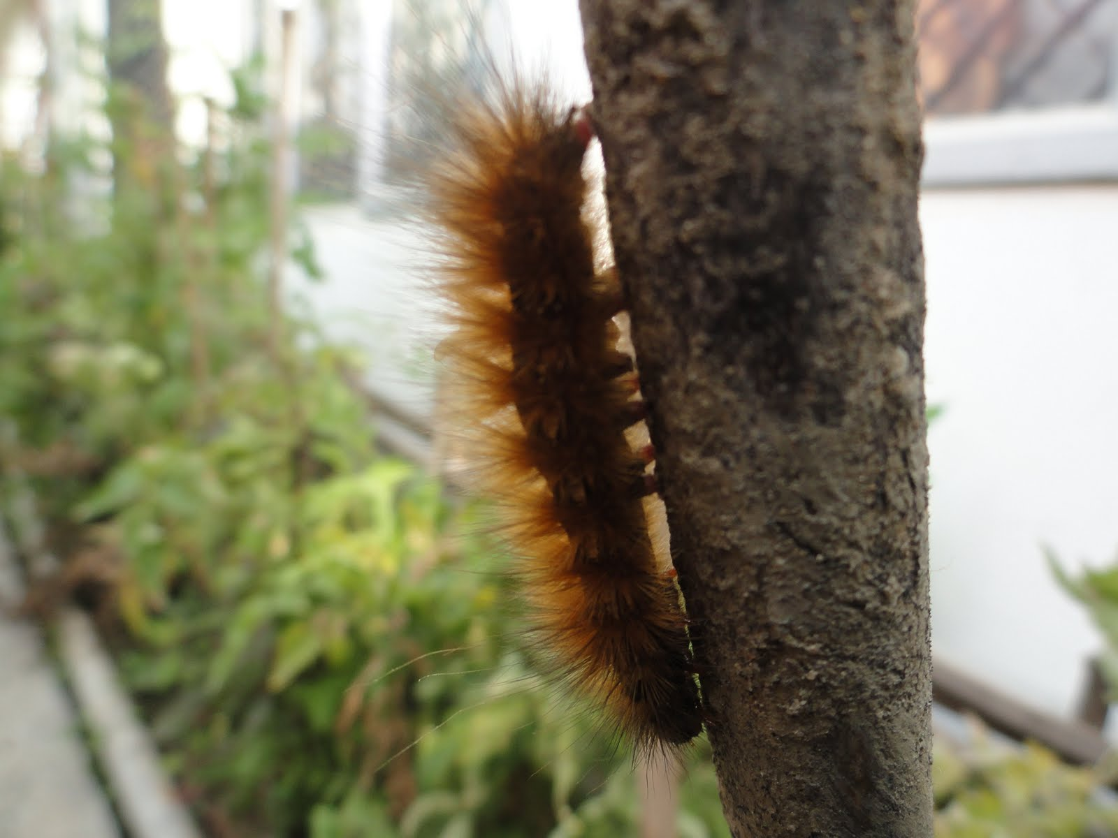 Black And Brown Caterpillars Turn Into 95