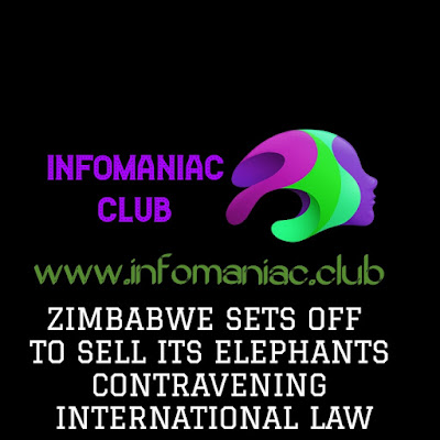 Zimbabwe to sell its elephants thereby Contravening International law