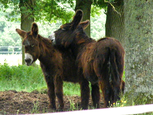 Poitevin Asses. France. Photographed by Susan Walter. Tour the Loire Valley with a classic car and a private guide.