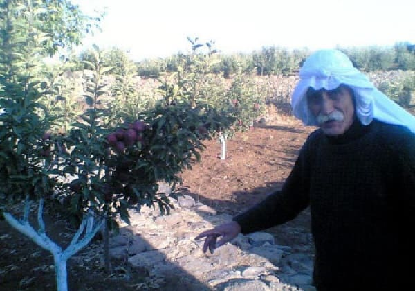 أهم مطالب مزارعي المشنف الإسراع في تسويق محصول التفاح ؟