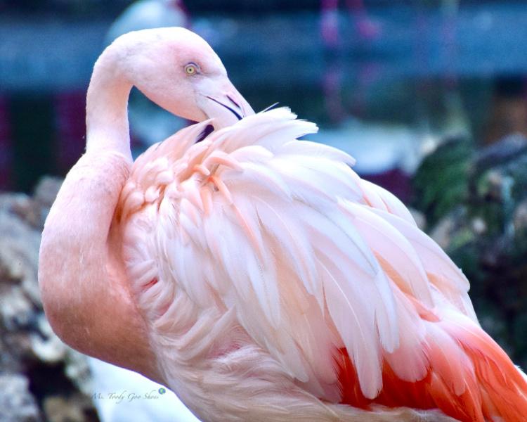 Flamingos of Florida - Ms. Toody Goo Shoes