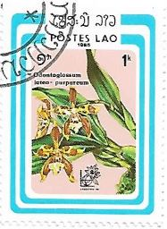 Selo Odontoglossum luteopurpureum