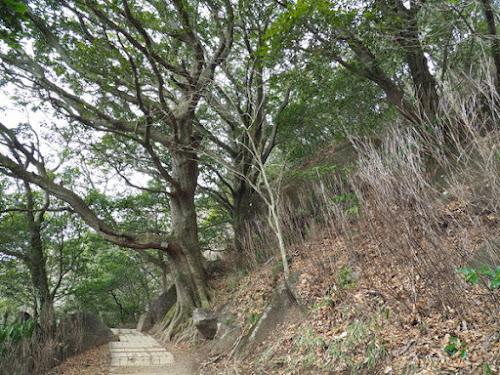 つつじヶ丘付近の登山道