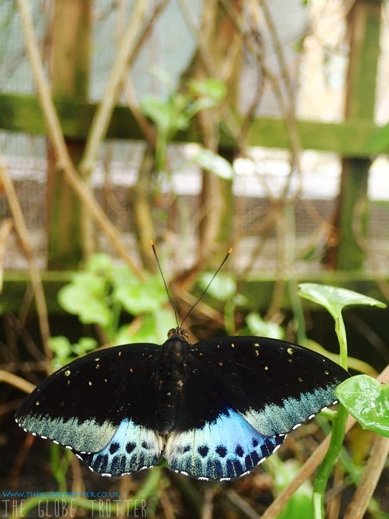 Butterfly Farm in Stratford-upon-Avon