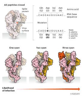 Diferentes tipos de proteína espiga