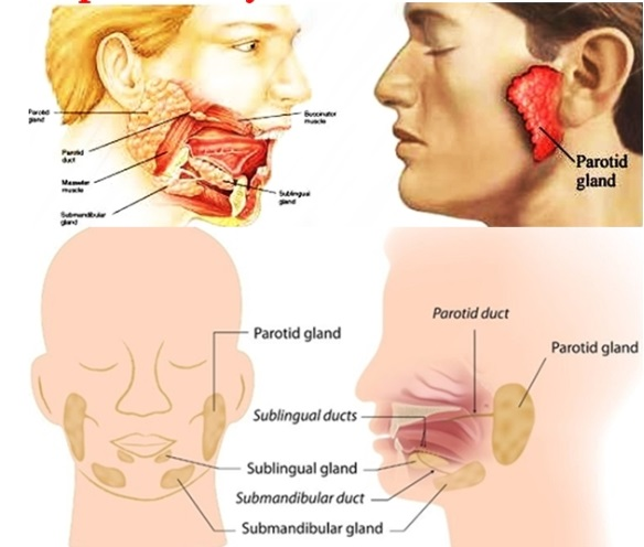 3 Parotid Tumors, Causes, Symptoms and How to Overcome