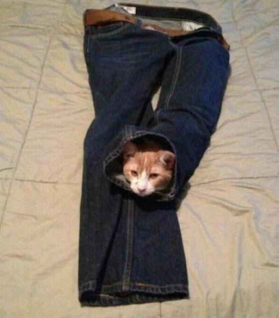 """""""Bật mí"""" địa điểm trốn tìm ưa thích của 21 cao thủ mèo"""