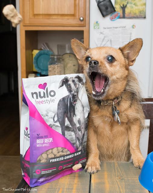 Mini Review: Nulo Freestyle Freeze-Dried Raw Dog Food