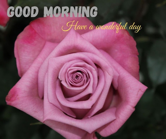 flowers images with good morning