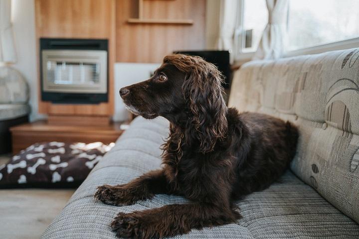 Dog Friendly Caravan Holiday in Cornwall