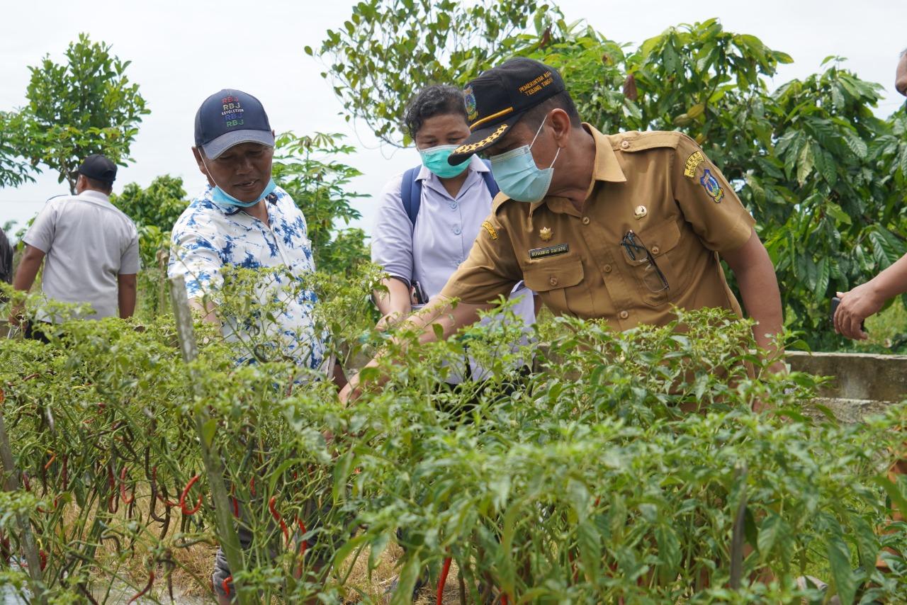Pulihkan Ekonomi Petani Dimasa Pandemi Covid-19, Pemko Tebingtinggi Berikan Bantuan Bibit dan Pupuk serta Pestisida