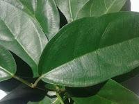 10 Indonesian traditional medicinal plants