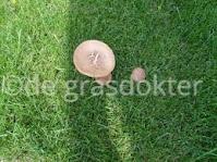 paddestoelen in gras
