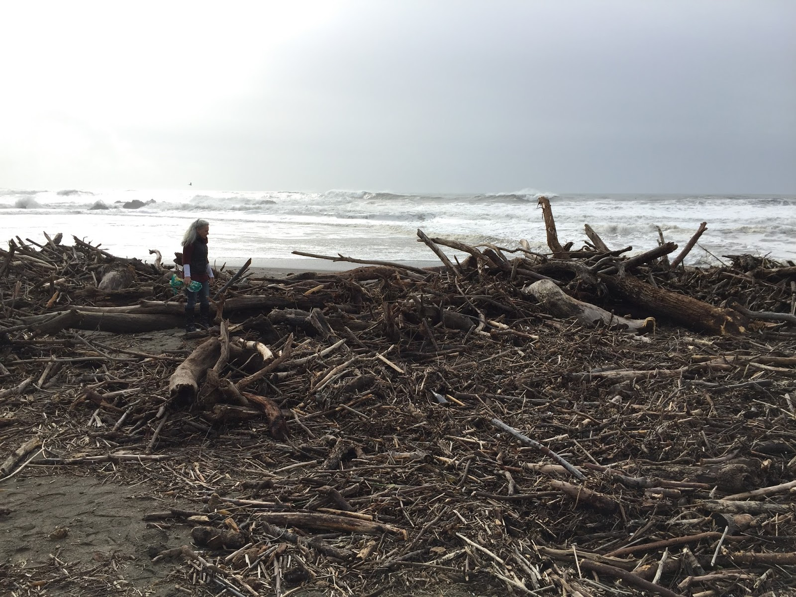 Collecting Driftwood California Beaches