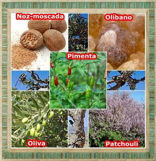 Ervas, Raízes, Sementes, Frutos/ N - P