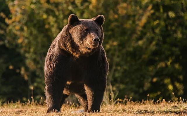 Πρίγκιπας του Λιχτενστάιν σκότωσε τον «βασιλιά» των αρκούδων στην ΕΕ
