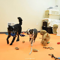 puppy_socialization_and_training