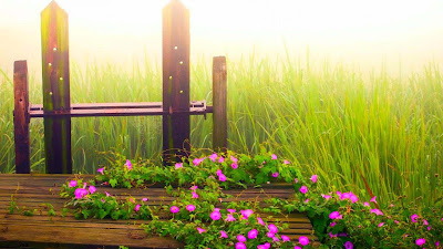 nature-cool-flowers-grass-morning-pictures