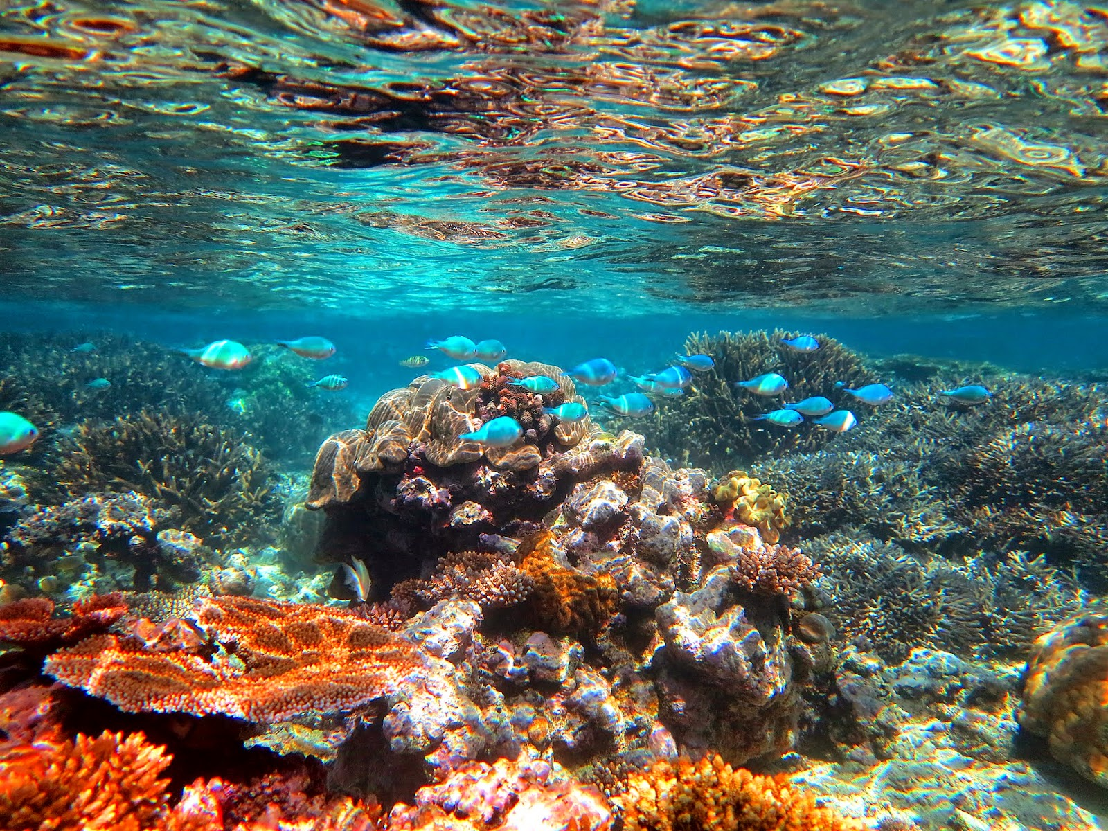 XstreemFishing.Com Blog: Tropical Fiji Snorkeling