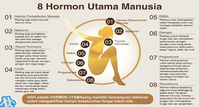 hormon utama manusia, hormon petumbuhan manusia, hormon melatonin, hormon tiroid, hormon insulin, hormon dhea, hormon estrogen, hormon progesteron, hormon testosteron