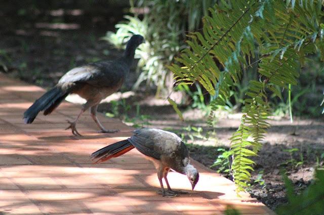 Pantanal, Mato Grosso do Sul